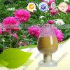 Pivoine blanche normale P.E 98% Albiflorin Paeoniflorin de la qualité 100%