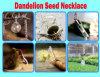 Семя одуванчика ожерелья одуванчика заполнило стеклянную спираль «сновидения ювелирных изделий ожерелья шара приходит поистине
