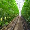 Cintas de riego plásticas de la irrigación por goteo de China para los vehículos