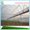 중국 판매를 위한 상업적인 이용된 온실 프레임