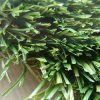 庭(ALOE-35Y8)のためのU Shape Artificial Grass