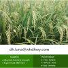 Chlorpyrifos agricultural dos produtos químicos (97%TC, 40.8%EC, 480EC, 240ULV, 450ULV, 300CS, 400CS)