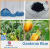 100% طعام صانية طبيعيّة زرقاء لون زهرة غردينيا اللون الأزرق صبغ