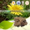 Gongo natural puro Ying de la PU de Officnala del Taraxacum del diente de león de la medicina de la hierba del 100%