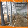 높은 생산 네덜란드 기술 다중 경간 유리제 녹색 집