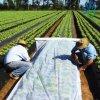 De Niet-geweven Stof van pp Spunbond voor Landbouw