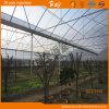 Estufa de alumínio do jardim da folha do policarbonato do frame para o tomate do Hydroponics