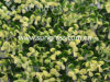 Трава стены Decrative искусственная для домашнего украшения (SUNW-MZ00012)