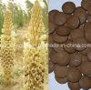 Biokost, oberstesseltenes, 100% natürlicher organischer wilder Desertliving Cistanche Auszug, kaubare Tabletten, reiner natürlicher Aphrodisiac