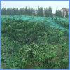 Contributo della pianta al reticolato di nylon rampicante del traliccio delle piante