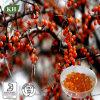 바다 털갈매나무 씨 기름, 장과 기름 및 Softgel