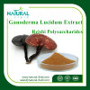 다당류 10%-50% Ganoderma Lucidum 추출 Palnt 추출