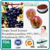 Extracto natural del germen de la uva del 100% (Proanthocyanidins, polifenoles, el OPC95% ULTRAVIOLETA) (RD-E017)