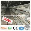 Camp de poulet à rôtir de technologie de Poul
