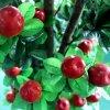 Uso ao ar livre Man-Made Apple Tree