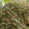 軍隊は網、ハンチング戦術的なCamoの純森林をごまかす