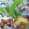 Polvere naturale pura di Odoratum del Polygonatum