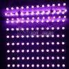 Luz publicitaria innovadora de la cortina del contraluz SMD5050 RGB LED