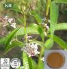 Herb entier Lemon Verbena Extract pour Improving Sleep