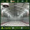 Construcción de viviendas de acero de pollo del bajo costo de Qingdao