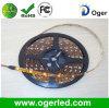 LED-im Freienstreifen (OGR-006)