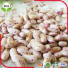 軽い斑入りの腎臓の豆またはインゲンマメか砂糖の豆