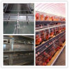 Sale quente Layer Chicken Coop para Chicken Farm