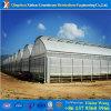 Multispan 나무 딸기를 위한 상업적인 Hydroponic 필름 녹색 집