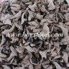 Fungo de madeira secado do preto da orelha