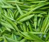 Tè verde con il buon prezzo