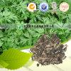 De zuivere Natuurlijke Geneeskunde Folium Artemisiae Argyi Ai Ye van het Kruid