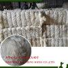 Ug da fibra branca descorada classe do sisal