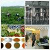 20:1 do 10:1 do pó do extrato da raiz do selo dourado, extrato do rizoma da grama de Lalang