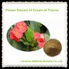 Extrait de fleur de qualité de la tête des épines