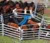 Высокая загородка ярдов поголовья Quaility/загородка коровы/лошади/овец
