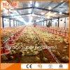 Máquinas automáticas de fazenda de aves domésticas para fazenda de frango com frango