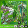 Plant Support Net for Climbing Plants