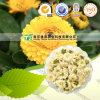 Естественная травяная хризантема сырья завода