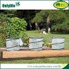 Onlylife BSCIの再使用可能な庭の温室植物保護カバー