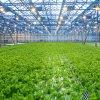 Solo invernadero de la agricultura de la película del palmo