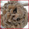 사나운 유기 Maitake/Maitake 버섯 추출 또는 다당류