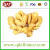 Exportation de gingembre frais en Amérique du Nord