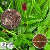 Extrato da raiz de Burnet do jardim de China/extrato Burnet do jardim