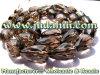 Pierre faite main de quartz fumeux de Fceted pour des bijoux