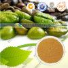Acido clorogenico di caffè del chicco dell'estratto del caprifoglio verde di Eucommia Ulmoides