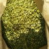 Урожай самого лучшего цены стерженей семян тыквы новый