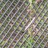 1m X 10mの強い草の泥炭の保護補強の網のマットの駐車場の芝生