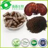 Shell roto Ganoderma lucidum polvo de esporas 98%