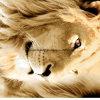 конструкция Pigment&Disperse льва 100%Polyester напечатала ткань для комплекта постельных принадлежностей