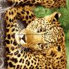 il piccolo leopardo Pigment&Disperse della giungla 100%Polyester ha stampato il tessuto per l'insieme dell'assestamento